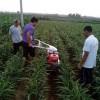 哪里有卖小型微耕机的小型开沟机哪个牌子好中耕培土机